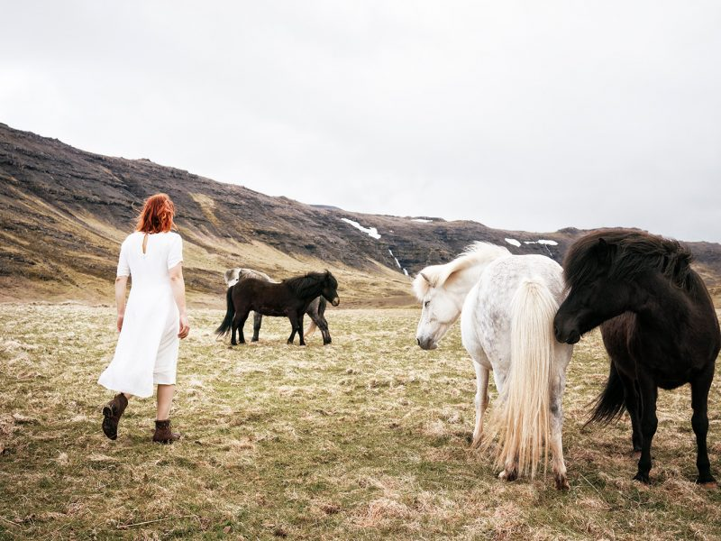 Delphine Millet Wonderland - Icelandic horses field Iceland Photography - Art conceptual photographer in Berlin